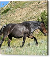 Dark And Wild Horse Acrylic Print by Sabrina L Ryan