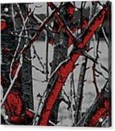 Dark Branches Acrylic Print