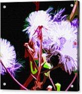 Dark Dandelions Acrylic Print