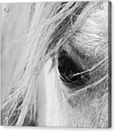 Dark Eyes Acrylic Print