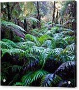 Dark Ferns Acrylic Print