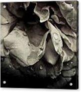 Dark Flower 13 Acrylic Print