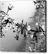 Dark Flower Acrylic Print