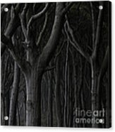 Dark Forest Acrylic Print