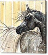 Dark Grey Arabian Horse 2014 02 17 Acrylic Print