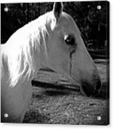 Dark Horse 2 Acrylic Print by Chasity Johnson