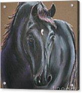 Dark Horse Acrylic Print