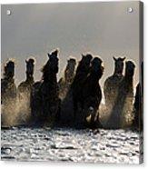 Dark Horses Acrylic Print