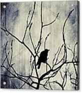 Crow In Dark Lights Acrylic Print