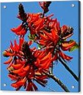 Dark Orange Coral Blossom Acrylic Print