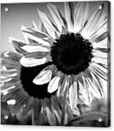 Dark Petals Acrylic Print