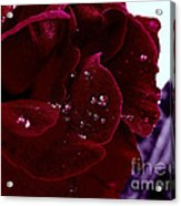 Dark Red Rose Acrylic Print