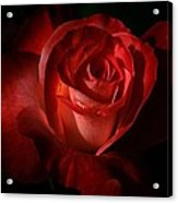 Dark Red Rose Acrylic Print