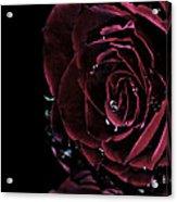 Dark Rose 2 Acrylic Print by Ann-Charlotte Fjaerevik