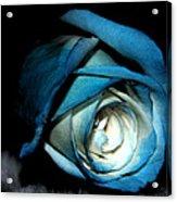 Dark Rose Acrylic Print