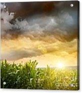 Dark Skies Looming Over Corn Fields  Acrylic Print