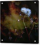 Dark Thistle Acrylic Print