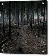 Dark Trail Acrylic Print