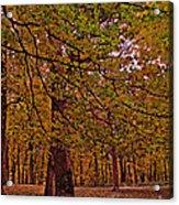Darker Textured Autumn Trees Acrylic Print