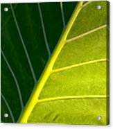 Darkness And Light - Elephant Ear Leaf Details Acrylic Print