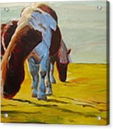 Dartmoor Ponies Acrylic Print