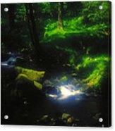 Dartmoor Stream Acrylic Print