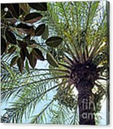 Date Palm And Rubber Tree Branch Acrylic Print