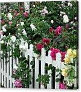 David Austin Roses Chelsea Flower Show Acrylic Print