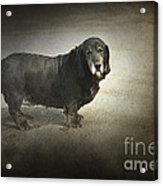 Dawg Acrylic Print by The Stone Age