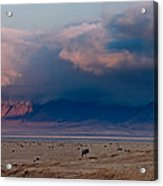 Dawn In Ngorongoro Crater Acrylic Print