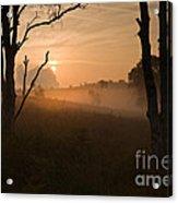 Cannock Chase Dawn Mist Acrylic Print