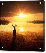 Dawn's Golden Light Acrylic Print