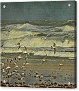 Day For The Birds Acrylic Print