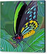 Day-glo Butterfly Acrylic Print