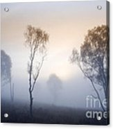Cannock Chase Day Is Dawning Acrylic Print