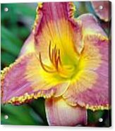 Day Lilly In Bloom Acrylic Print