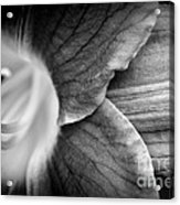 Day Lily Detail - Black And White Acrylic Print