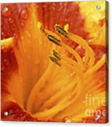 Day Lily In The Rain - 688 Acrylic Print