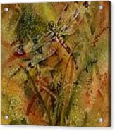 Day Of The Dragonfly Acrylic Print