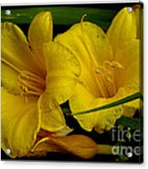 Day Of The Lilies  Acrylic Print
