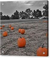 Day Of The Pumpkins Acrylic Print by Thomas  MacPherson Jr