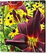 Daylilies And Rudbeckia Acrylic Print