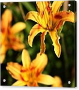 Daylillies0107 Acrylic Print