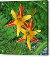 Frans Hall Daylily Attention Getter Acrylic Print