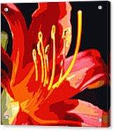 Daylily Flame Acrylic Print