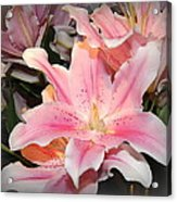 Pink Daylily In Bloom Acrylic Print