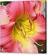 Daylily Acrylic Print by Victoria Sheldon