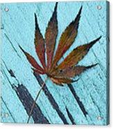 Dazzling Japanese Maple Leaf Acrylic Print