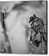 Dead And Dark Acrylic Print