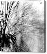 Dead Ash Acrylic Print